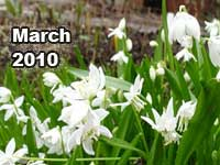 March 2010 monthly horoscope