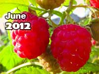 June 2012 monthly horoscope