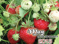 May 2013 monthly horoscope