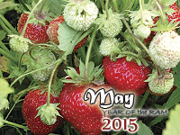 May 2015 monthly horoscope