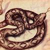 Dream Meaning Snake