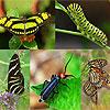 Dream interpretation Insects