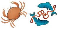 Cancer and Pisces Zodiac signs compatibility