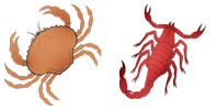 Cancer and Scorpio Zodiac signs compatibility