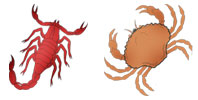 Scorpio and Cancer Zodiac signs compatibility