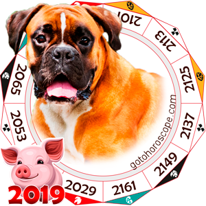 Dog 2019 Horoscope