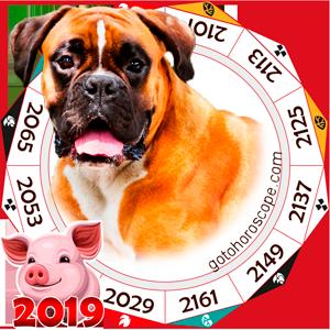 Dog 2019 Horoscope