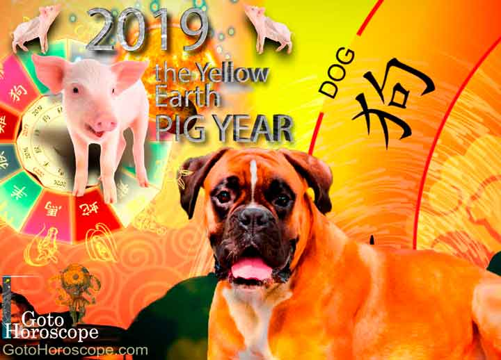 Dog 2019 Horoscope for the Yellow Earth Pig Year