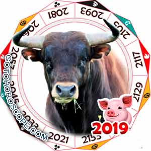 Oriental 2019 Horoscope for Ox