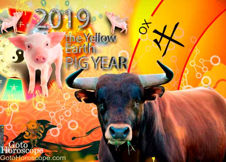 Ox 2019 Horoscope for the Yellow Earth Pig Year
