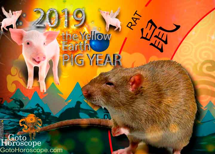 Rat 2019 Horoscope for the Yellow Earth Pig Year