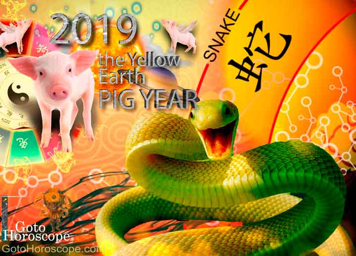 Snake 2019 Horoscope for the Yellow Earth Pig Year