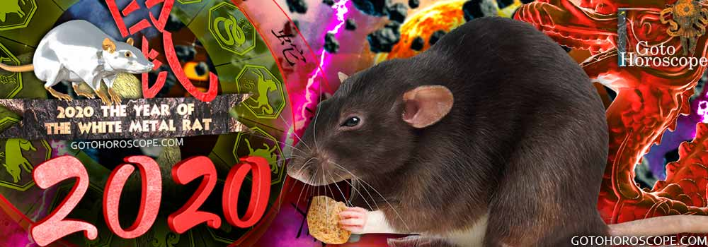 Rat 2020 Horoscope for the White Metal Rat Year