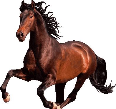 Horse Symbol for Chinese New Year Horoscope 2021