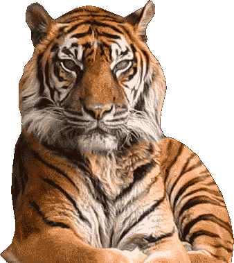 Tiger Symbol for Chinese New Year Horoscope 2021