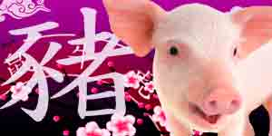 Chinese Horoscope 2021 for Pig