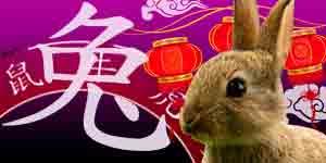 Chinese Horoscope 2021 for Rabbit