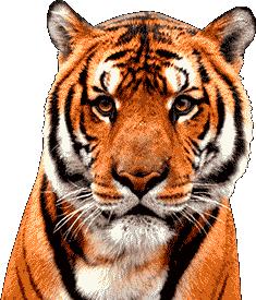 Yearly Horoscope 2022 the Black Tiger Image