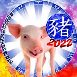 Pig Chinese New Year Horoscope 2022