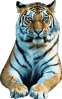 Black Water Tiger Character for Chinese New Year Horoscope 2022