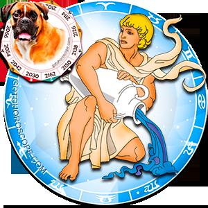 Aquarius Personality born in Dog year