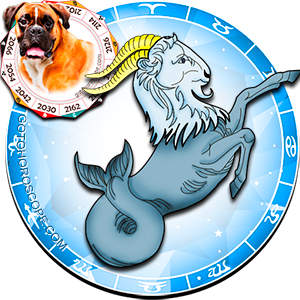 Capricorn Dog Chinese Horoscope and Zodiac Personality