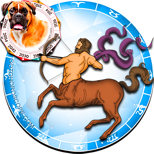 Sagittarius Dog Chinese Horoscope and Zodiac Personality