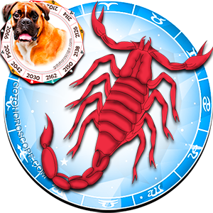 Scorpio Dog Chinese Horoscope and Zodiac Personality