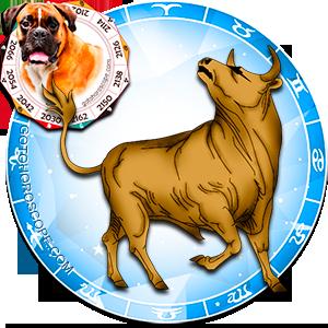 Taurus Personality born in Dog year