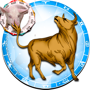 Taurus Personality born in Pig year