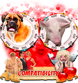 Dog Pig Zodiac signs Compatibility Horoscope