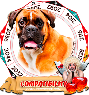 Chinese Zodiac sign Dog Compatibility Horoscope