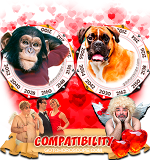 Monkey Dog Zodiac signs Compatibility Horoscope