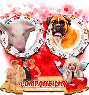 Pig Dog Zodiac signs Compatibility Horoscope
