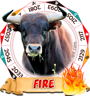 Fire Ox Chinese Astrology Animal Zodiac Personality Horoscope