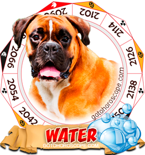 Water Dog Chinese Astrology Animal Zodiac Personality Horoscope