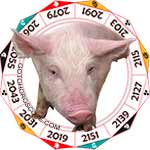 2018 Chinese Horoscope Pig for the Dog Year